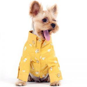 dog shirt colors