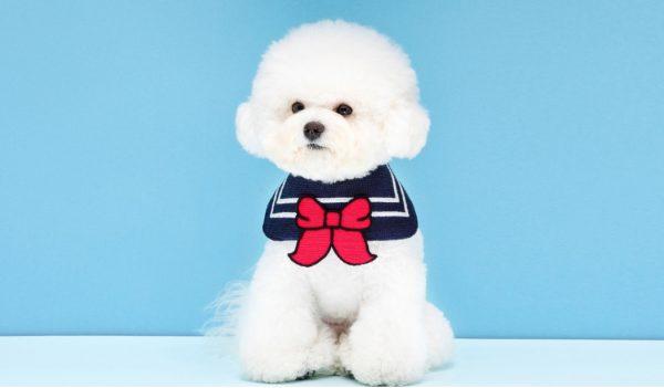 Dog Sailor Suit