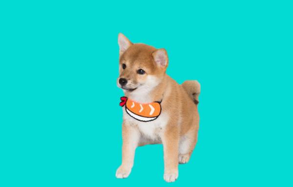 cute dog bandanas
