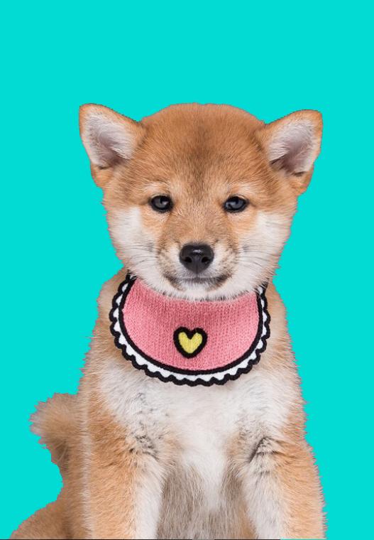 pink bandana dog