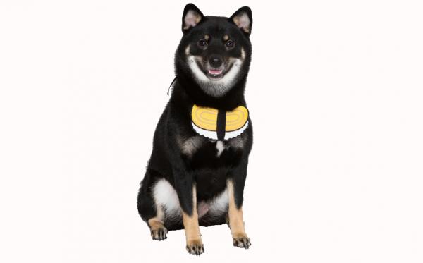 Small Dog Bandanas