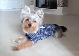 small dog shirts