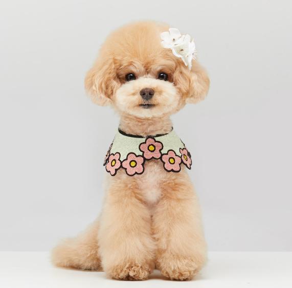 girl dog bandanas