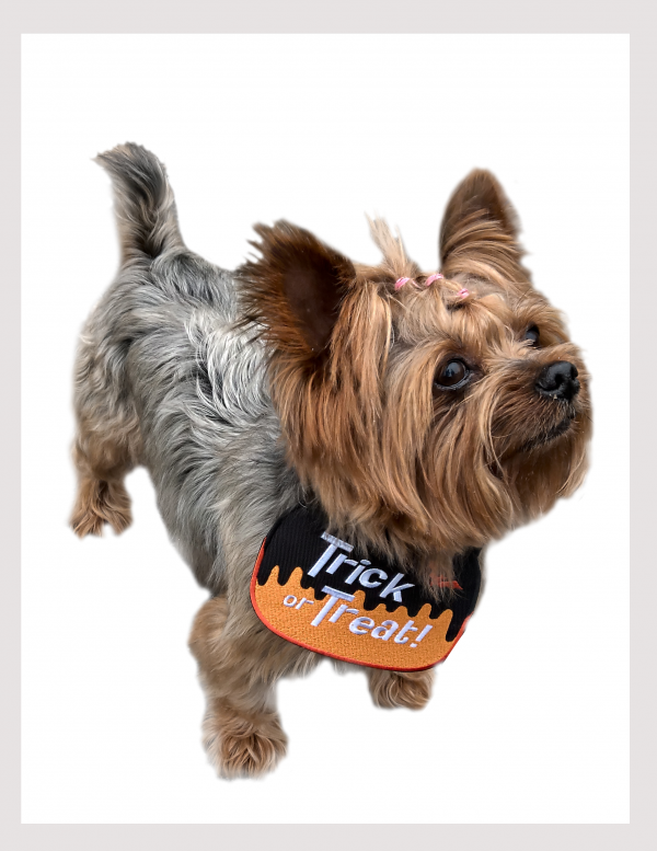 halloween collars for dogs