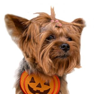 Halloween Costumes Small Dogs