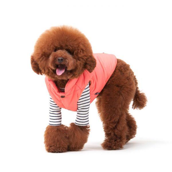 dog winter coat